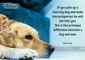 تفاوت سگ و آدم
